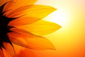 Summer Qigong @ Bozeman Dharma Center | Bozeman | Montana | United States